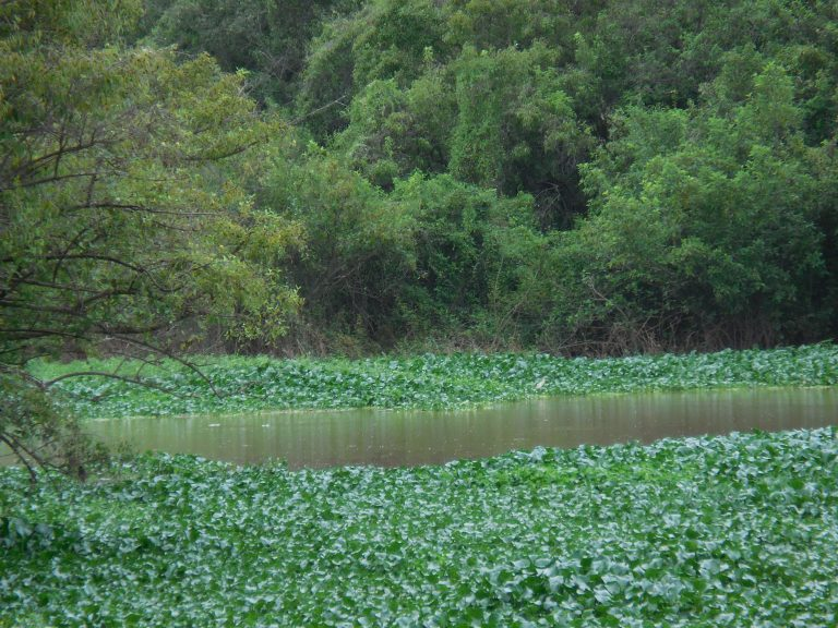 wetland ibis