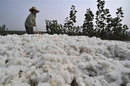 cotton-farmer