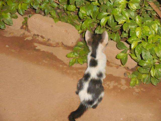 Kitty 1 640